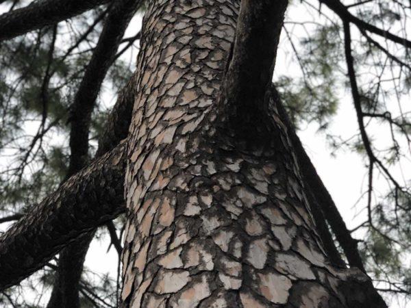 <span>A shattered tree</span><i>→</i>