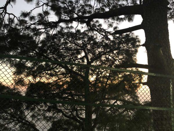 <span>Evening Shadow</span><i>→</i>
